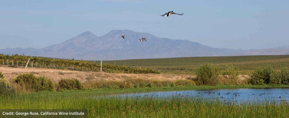 Farm Ponds for Irrigation